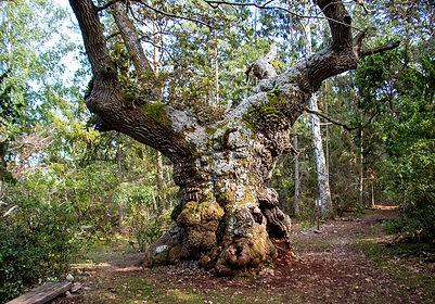 Trollskogen Nationalpark