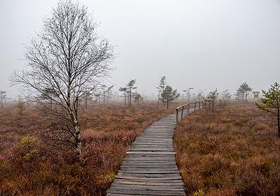 Naturlehrpfad - Schwarzes Moor