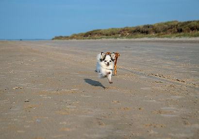 am Strand von Hirtshals