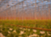 Drenthe Growers BV.jpg