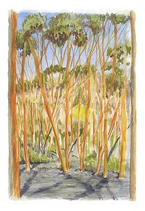 Gimlet Woodland_10x14_WM.jpg