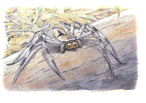 Huntsman spider (15x21)_1.jpg