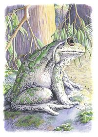 Motorbike Frog (15x21)_1.jpg