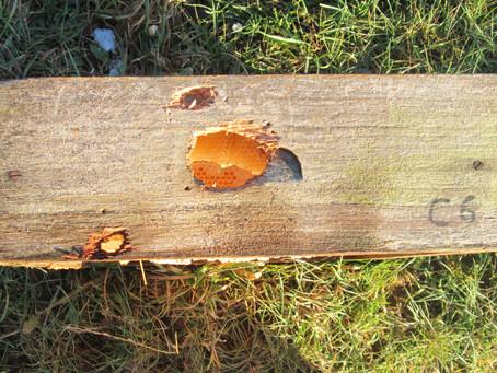 Woodpecker damage.