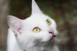 bigstock-cat-85344752