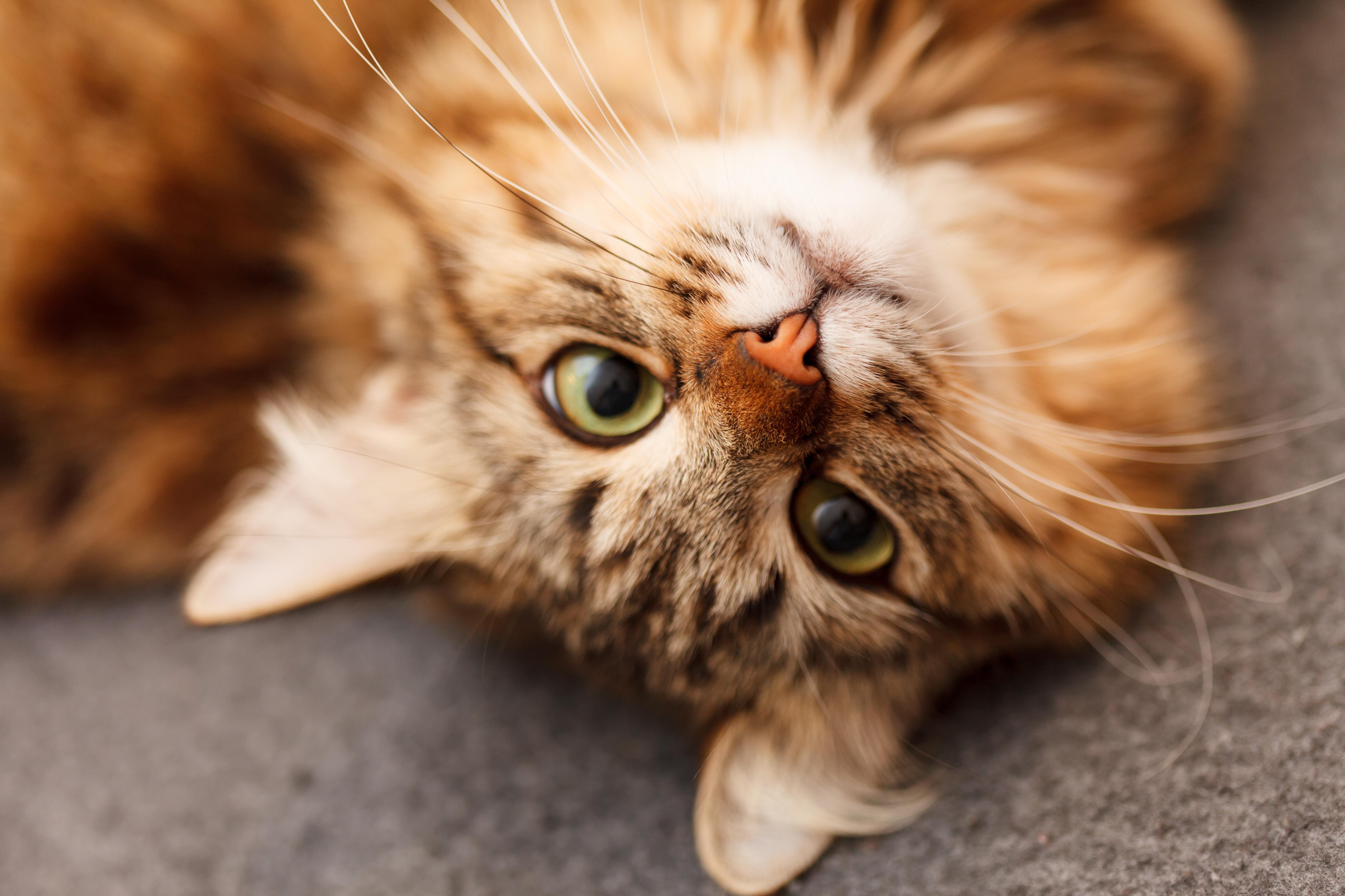 bigstock-nice-cat-54559769