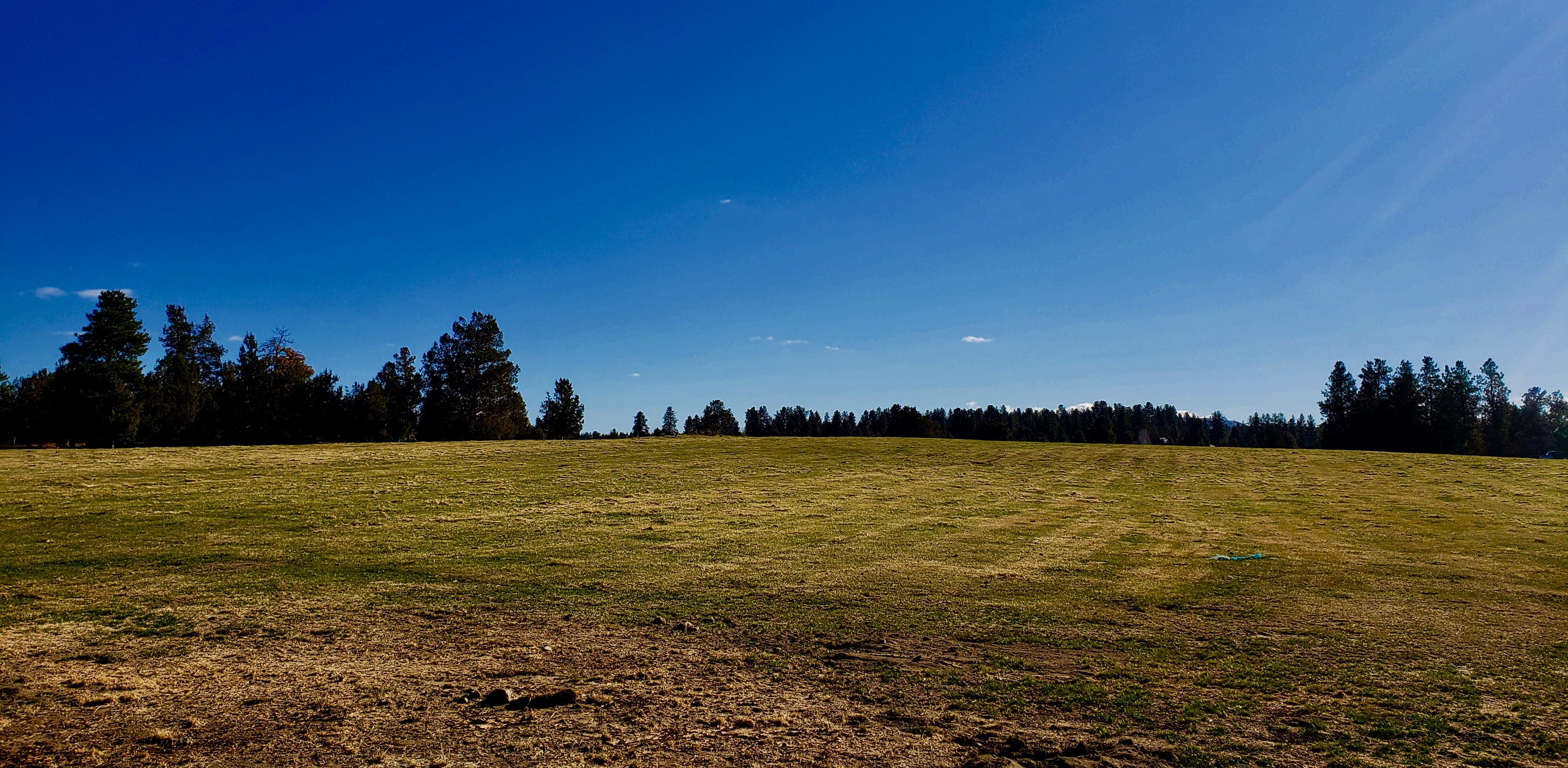 Field Photo 2 (1)