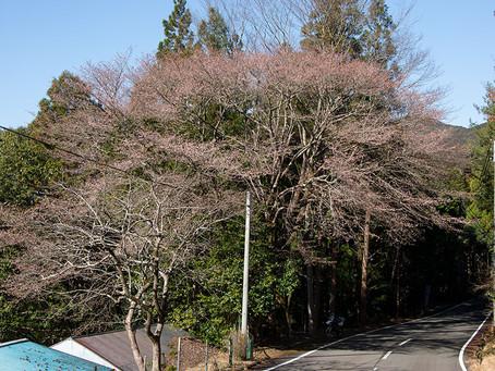 3/3 熊野市紀和町 田平子峠