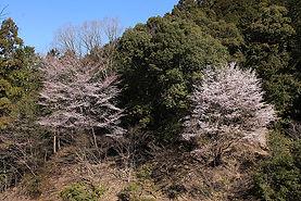 m_nanakoshi.jpg