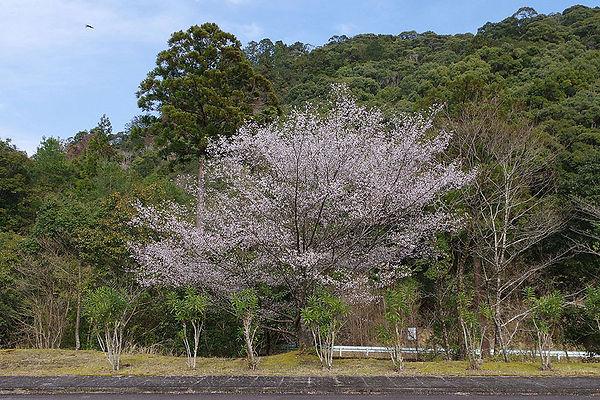 円満地公園
