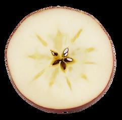 りんご輪切り_01.png