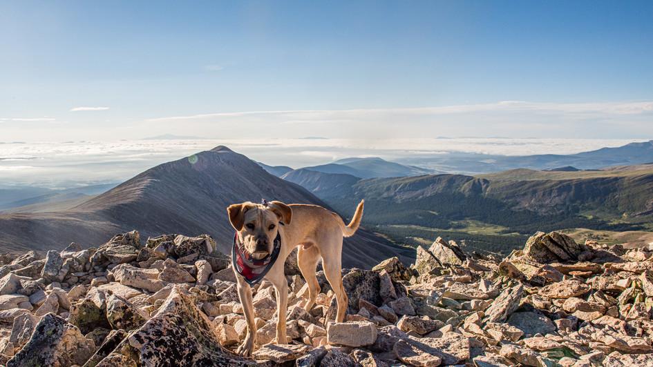 Mountain dogs.
