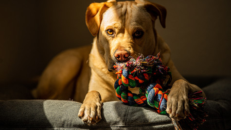 A dog and his toy.