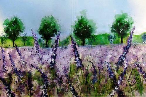 Lavendeleng