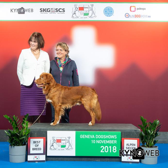 Geneva Dogshow