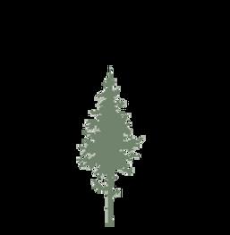 thumbnail_trädet grön.png
