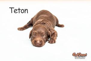 Teton Week 2.jpg