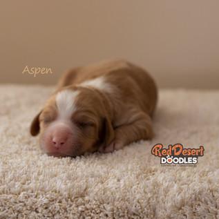 Aspen Cropped.jpg