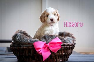 Hickory8.jpg