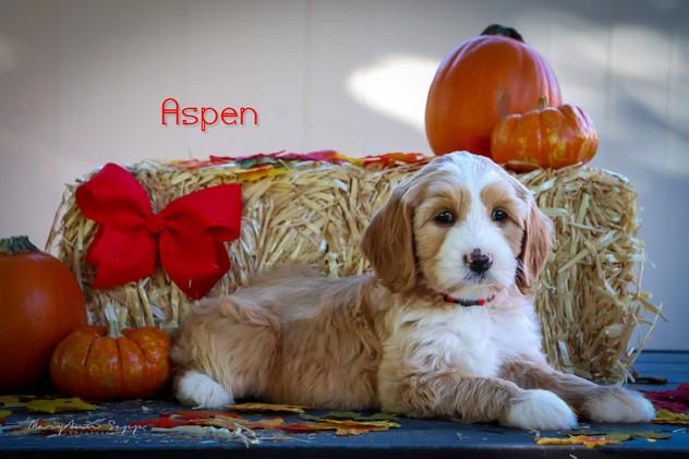 Aspen13.jpg