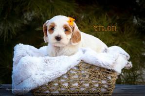 Strudel 4.jpg