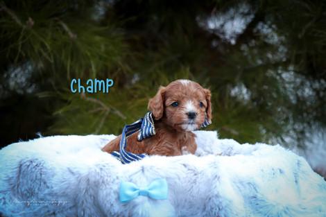 Champ 4.jpg