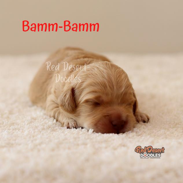 Bamm-Bamm.png