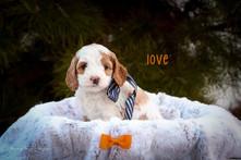 Love 4.jpg