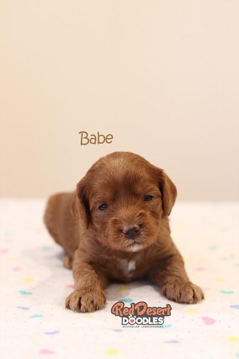 Babe 2.jpg