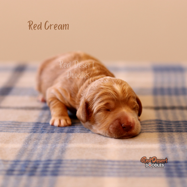 Red Cream.png