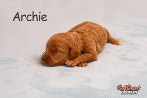 Archie Week 2.jpg
