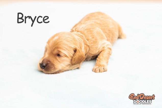 Bryce Week 2.jpg