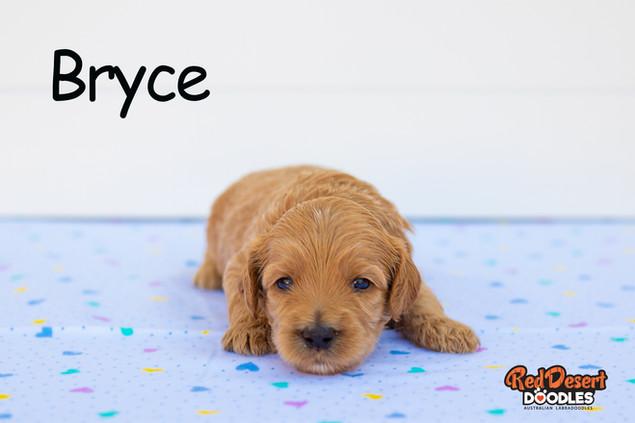 Bryce.jpg