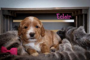 Eclair 1.jpg
