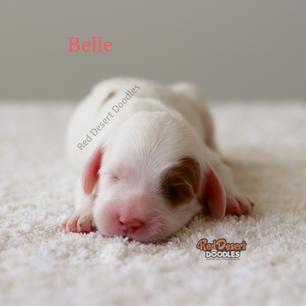 Belle.png