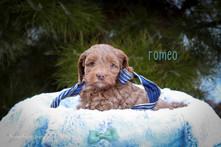 Romeo 4.jpg