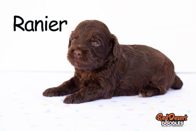 Ranier.jpg