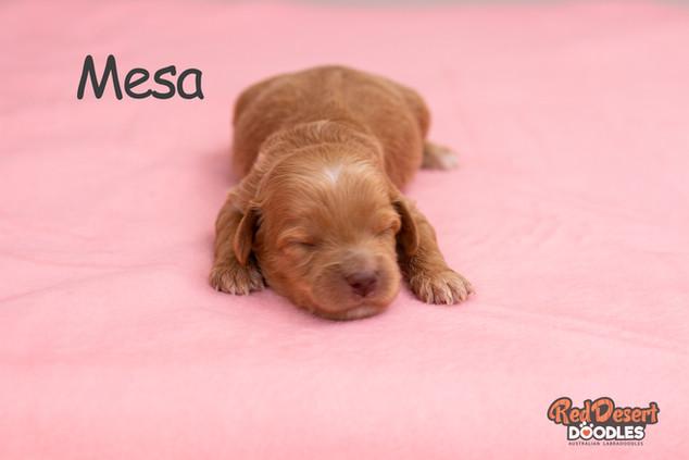 Mesa Week 2 (1).jpg