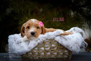 Eclair 4.jpg
