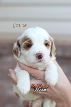 Strudel 2.jpg