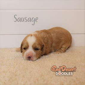 Sausage 1.png