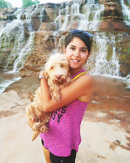 Australian Labradoodle Puppy   Red Desert Doodles Breeder