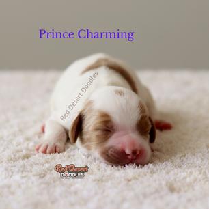 Prince Charming.png
