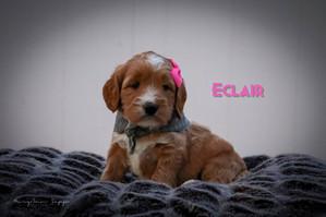 Eclair 3.jpg
