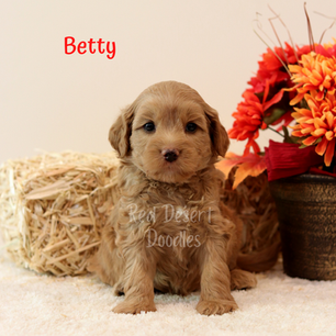 Betty.png