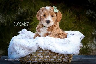 Cupcake 5.jpg