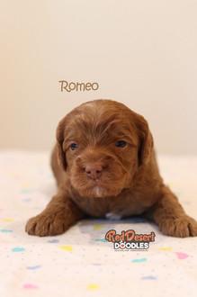 Romeo 2.jpg