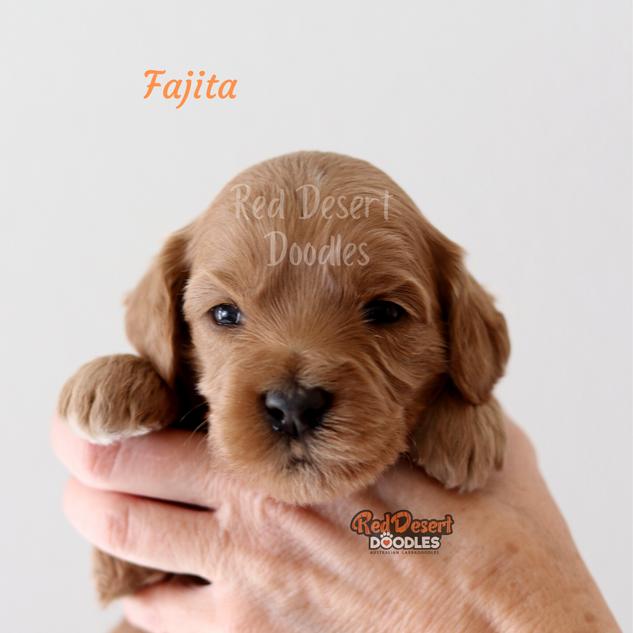 Fajita.png