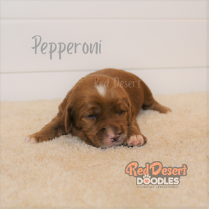Pepperoni 1.png