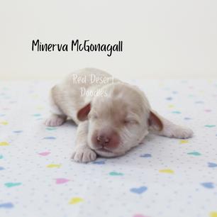 Copy of Minerva.png